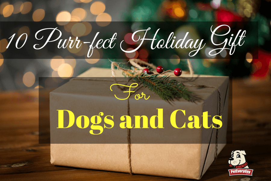 10 Purr-fect Holiday Gifts for Dogs and Cats