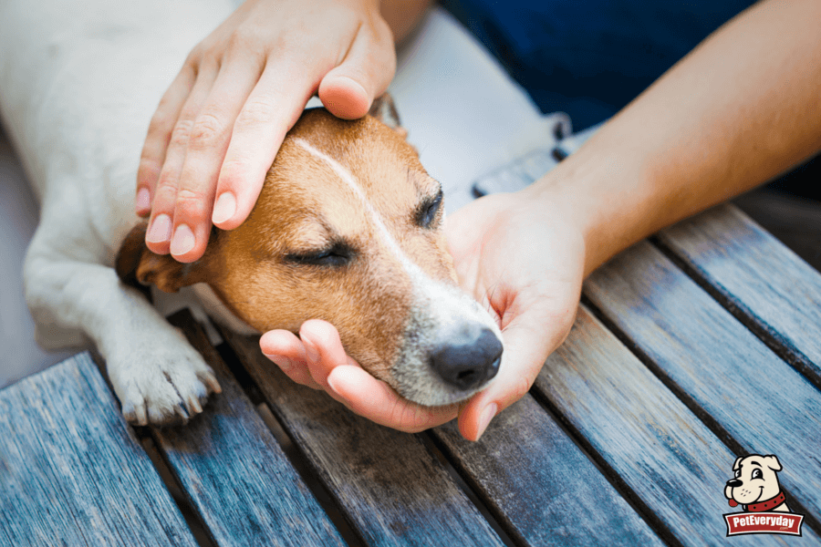 First-Aid-for-Pets-5-Common-Dog-Injuries